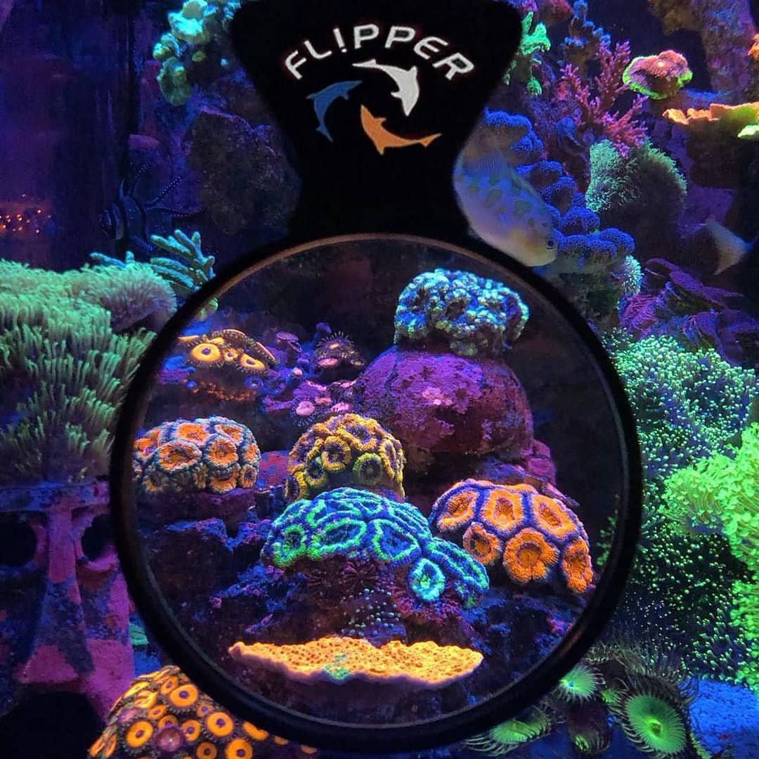 Flipper deepsee viewer