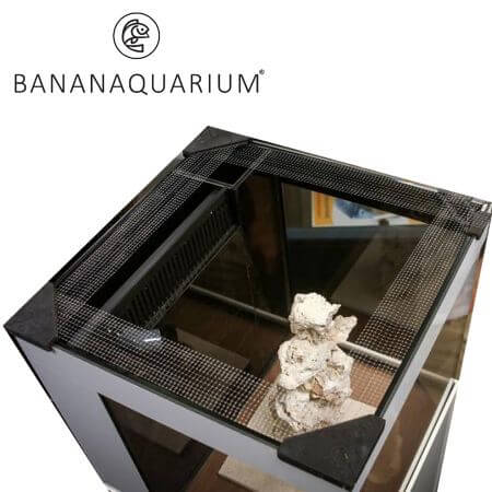 Banana aquarium Fishguard