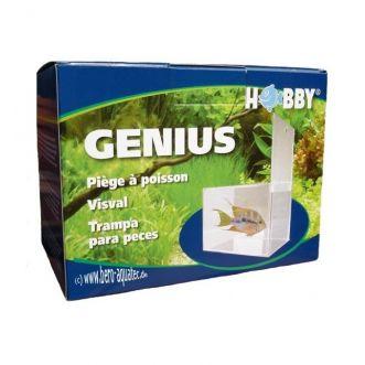Genius, fish trap